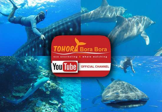 tohora bora bora youtube pictures
